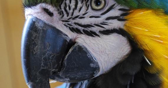 Train Parrot